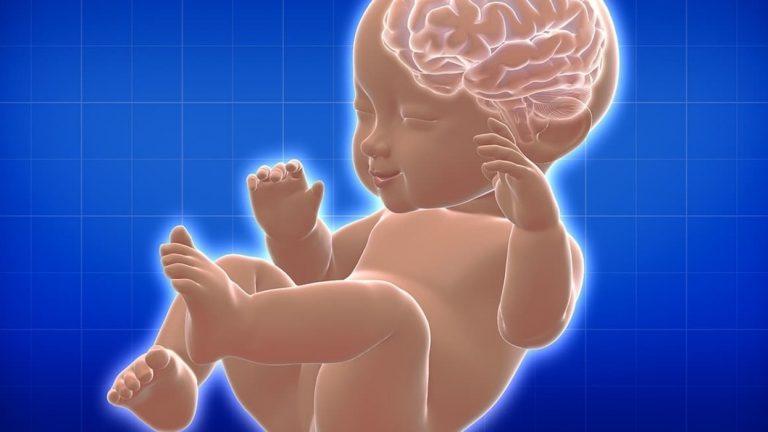 พัฒนาการสมองของทารกในครรภ์ ศึกษาไว้ จะได้เข้าใจ เจ้าตัวน้อย